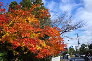 八重垣神社の紅葉