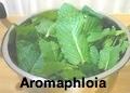 Aromaphloia
