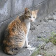 萩の野良猫3