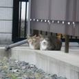 萩の野良猫4